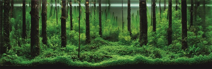 Aquascaping-1-685x222